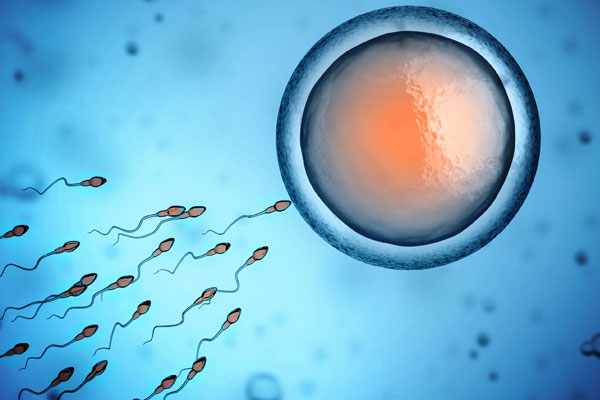 Adi Livnat – What is the role of sexual reproduction in evolution?