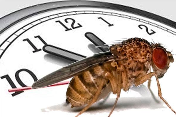 Eran Tauber – Genetics of the circadian clock
